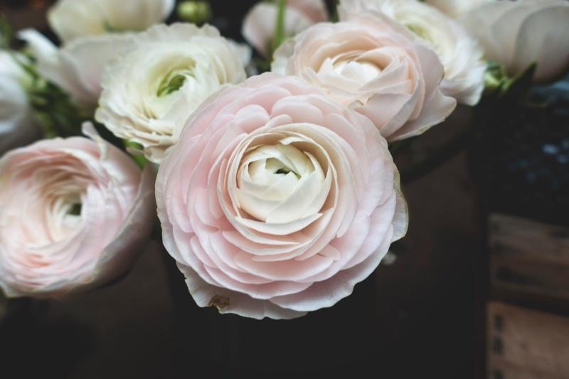 genetic-lupus-flowers-marker