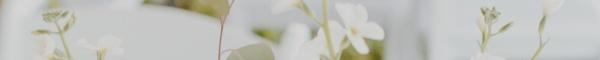 lupus awareness-selena-gomez-divider1